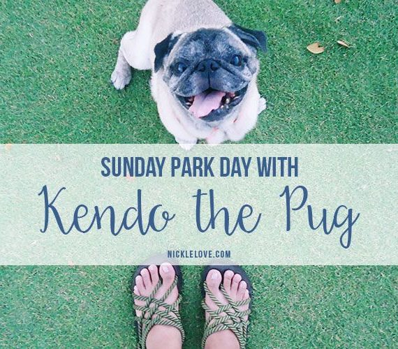 Sunday Park Day With Kendo The Pug